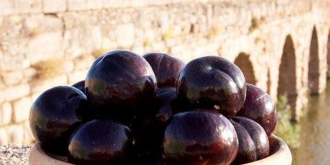 Naturcrex Organización de Productores de Fruta y Hortaliza