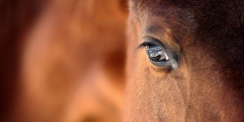 Spain Horses Fernando Molina Cría de caballos de pura raza española