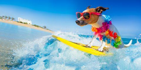 Turismo Canino Experiencias Dog Friendly para viajar con perro.